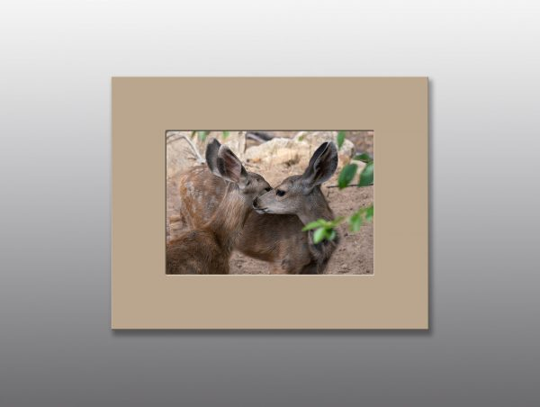 mule deer fawns - Moment of Perception Photography