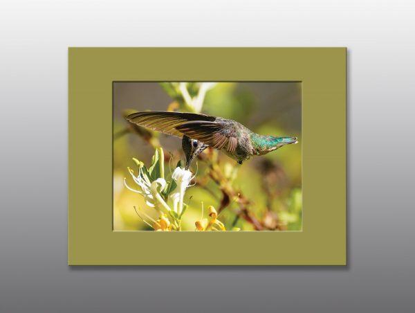 hummingbird and honeysuckle - Moment of Perception Photography