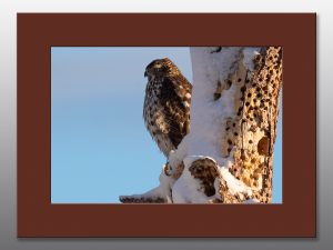 hawk in winter - Moment of Perception Photography