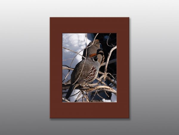 male and female quail - Moment of Perception Photography
