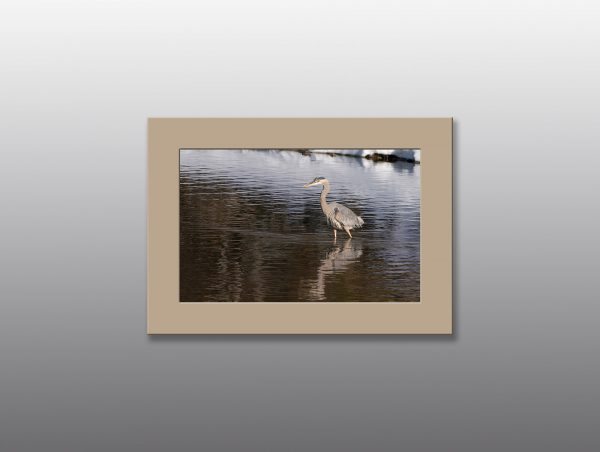 heron wading in lake - Moment of Perception Photography