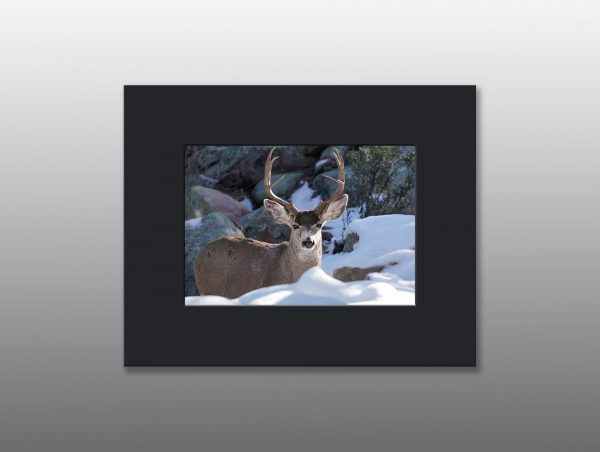 mule deer buck in snow - Moment of Perception Photography