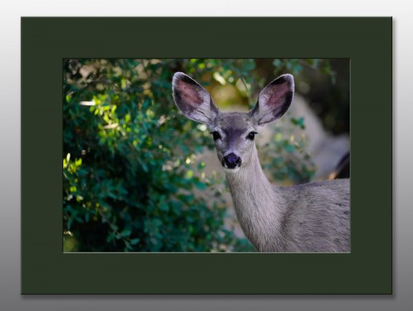 beautiful doe - Moment of Perception Photography