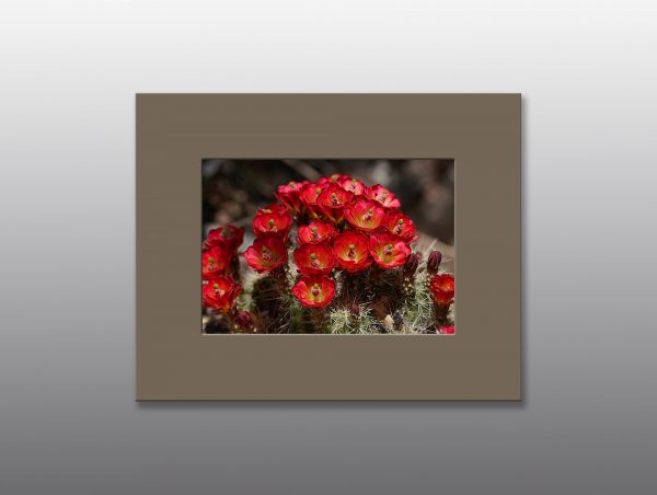 red cactus flowers - Moment of Perception Photography