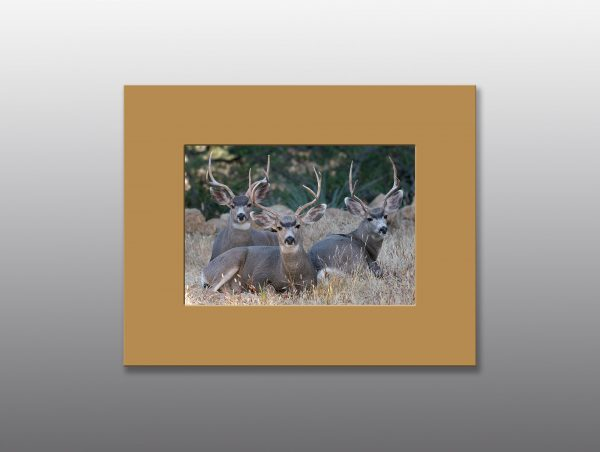 bucks with large antlers - moment of perception photography