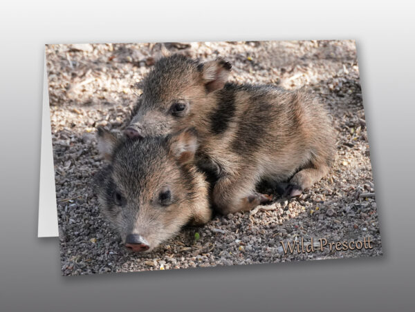 Baby Javelinas Laying on Each Other - Moment of Perception Photography
